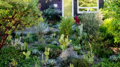 While Using Right Plants In Your Landscaping.